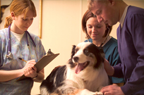Required Canine Influenza Vaccine October 1st