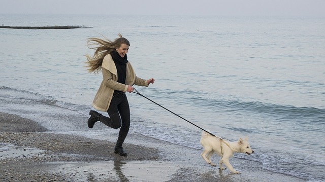 companion training for dogs running