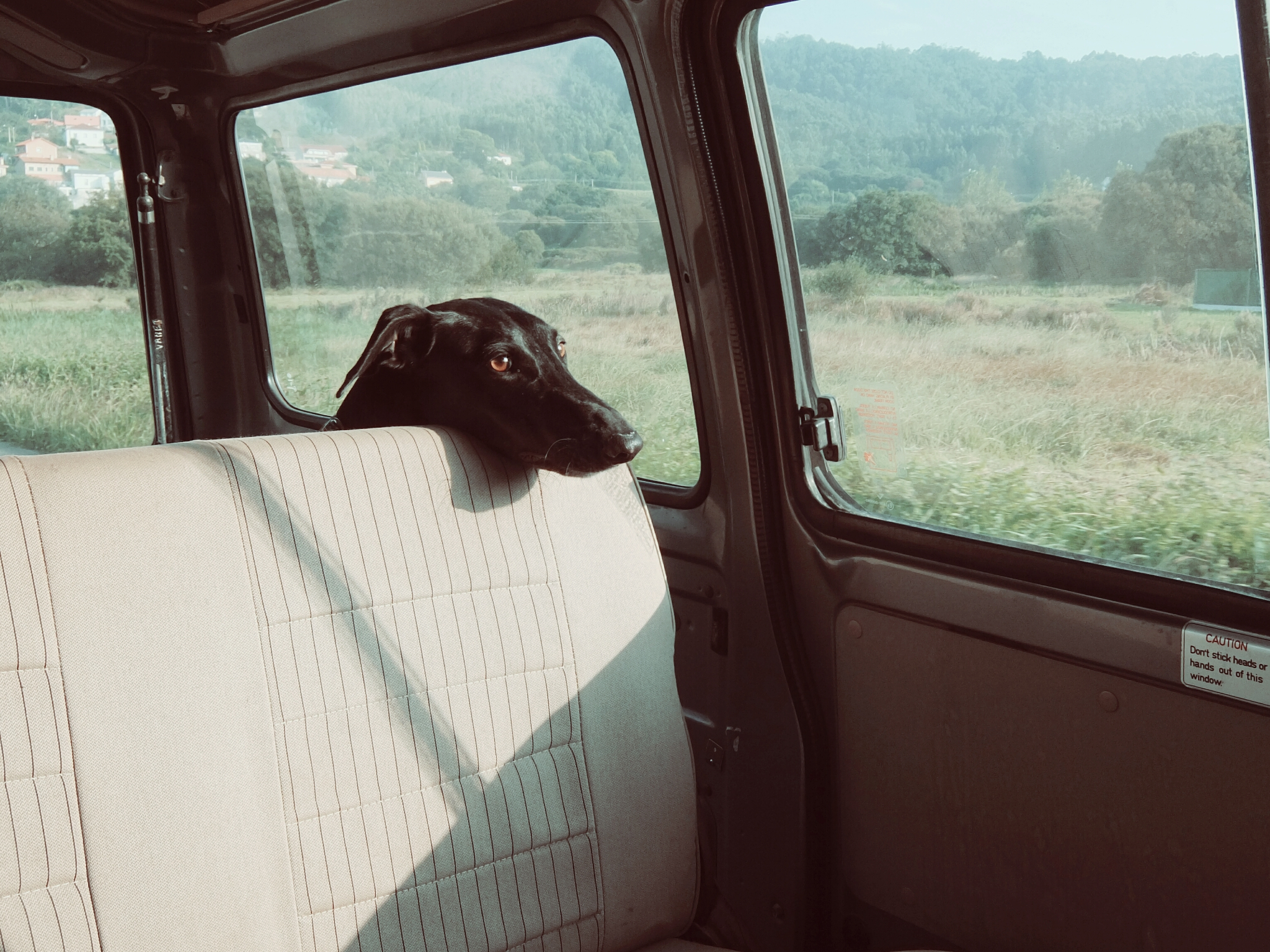 Tips for Moving With a Dog car