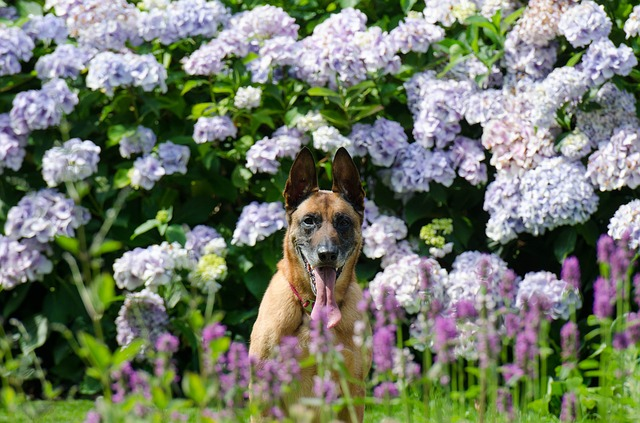 Pet Safety Tips in Bad Weather flowers