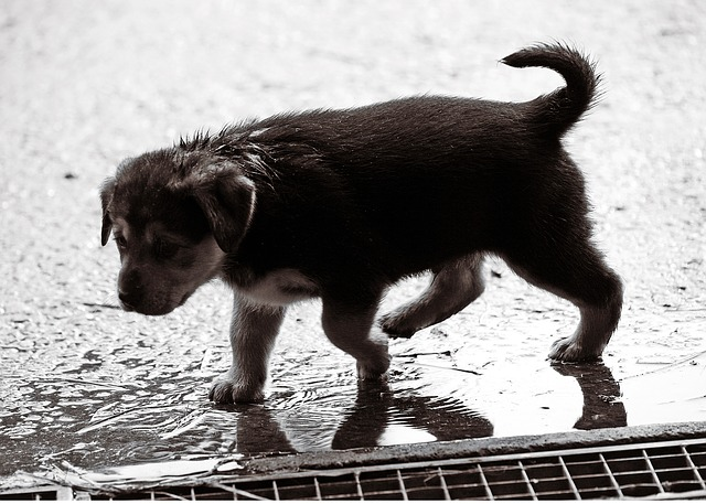 Pet Safety Tips in Bad Weather puppy