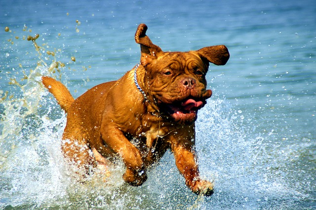 summer weather tips for dogs splash