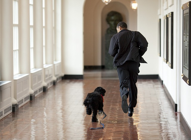 exercise your dog indoors obama